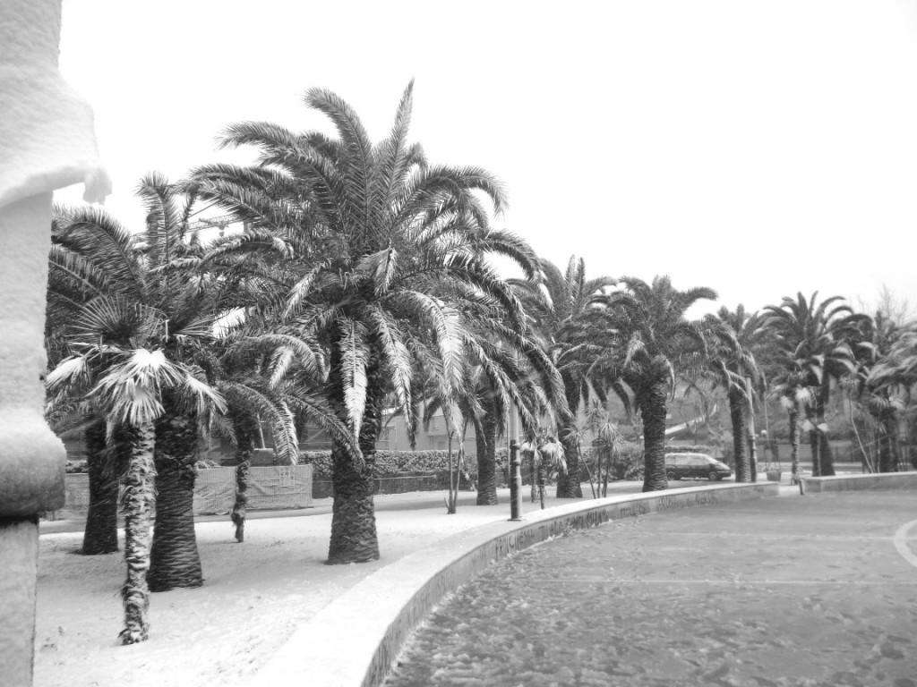 Olaszország - havas pálmafák
