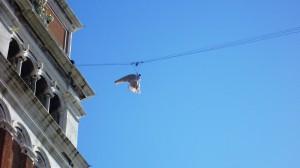 velencei karnevál - az angyal repülése